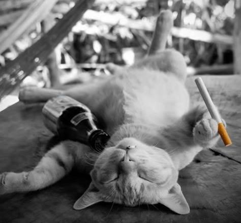 gato-bebedolas